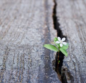 Hope-and-Resilience