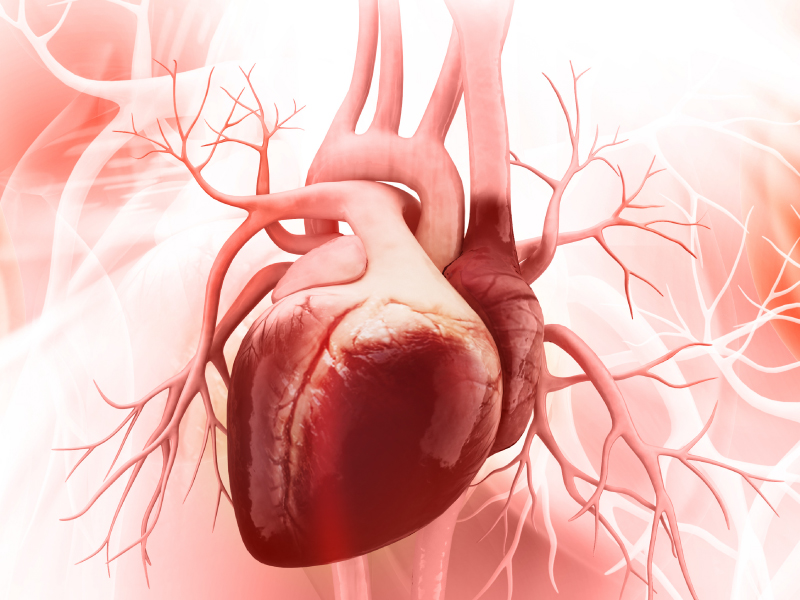 Heart Disease (Cardiovascular Disease) and the Benefits of Rehabilitation Services