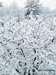 snow-tree-winter-storm